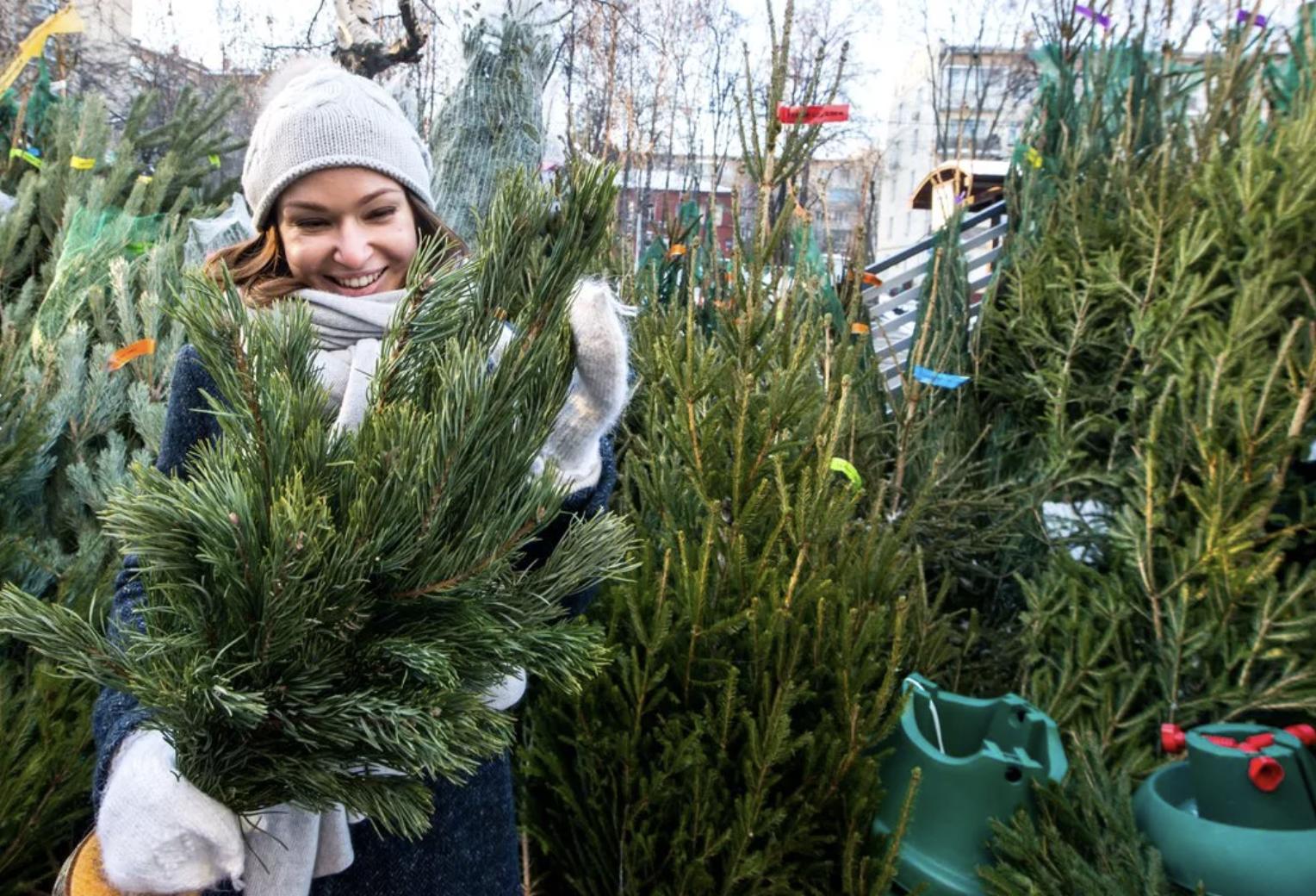 В Новороссийске появились зеленые деревья