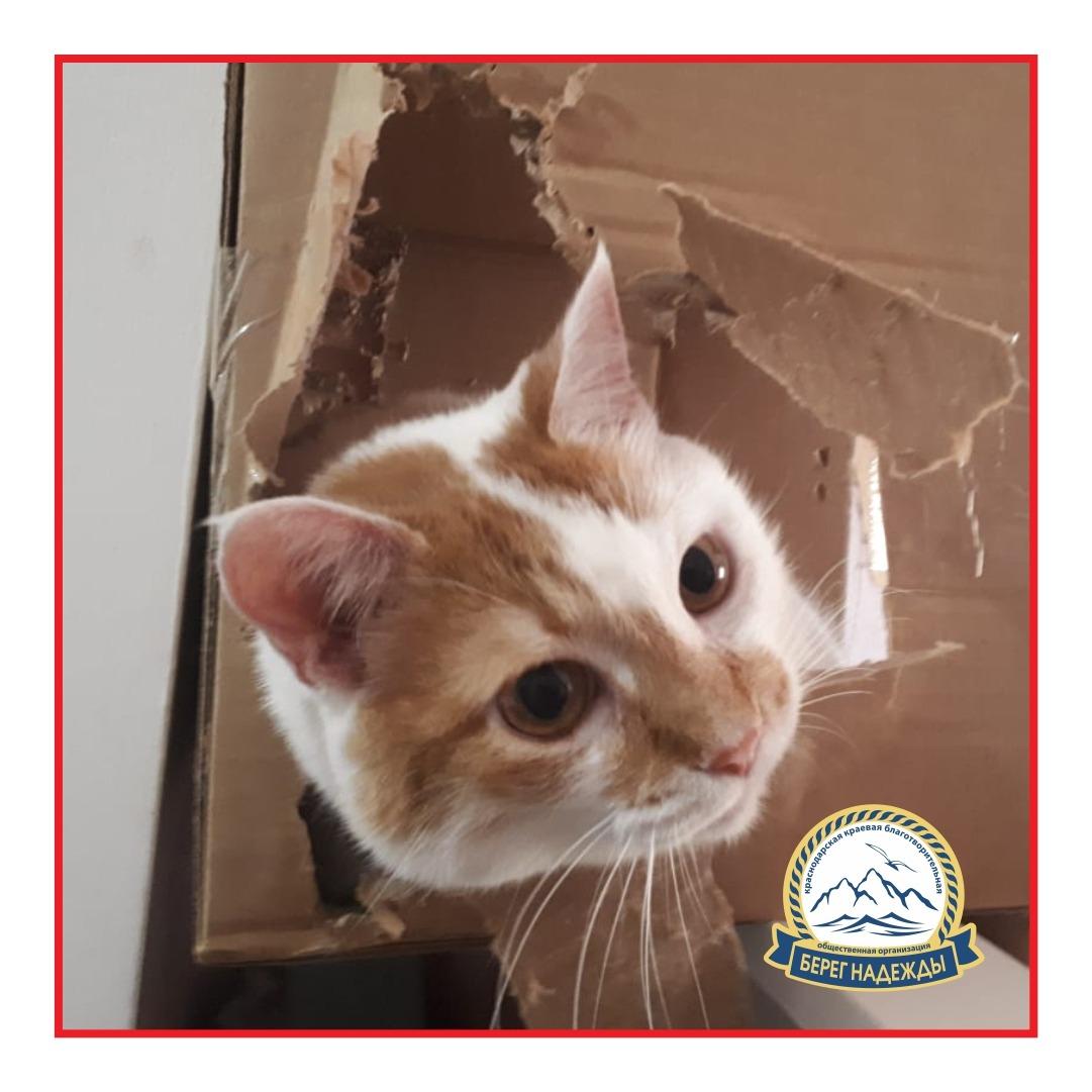 Бездомная кошка из Новороссийска стала финалисткой крупного конкурса