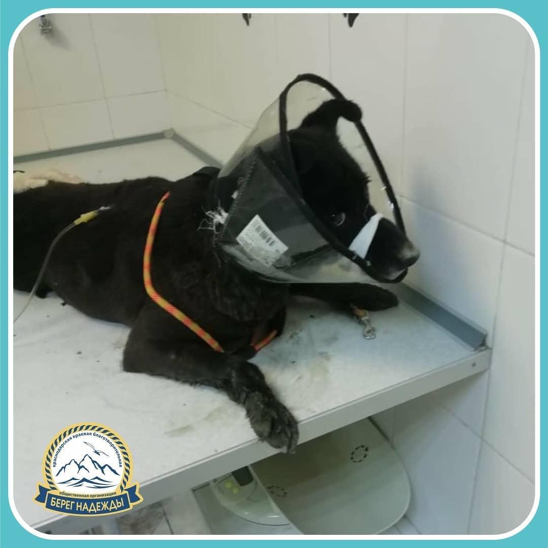 Новороссийцы спасли покалеченную собаку: операция длилась четыре с половиной часа