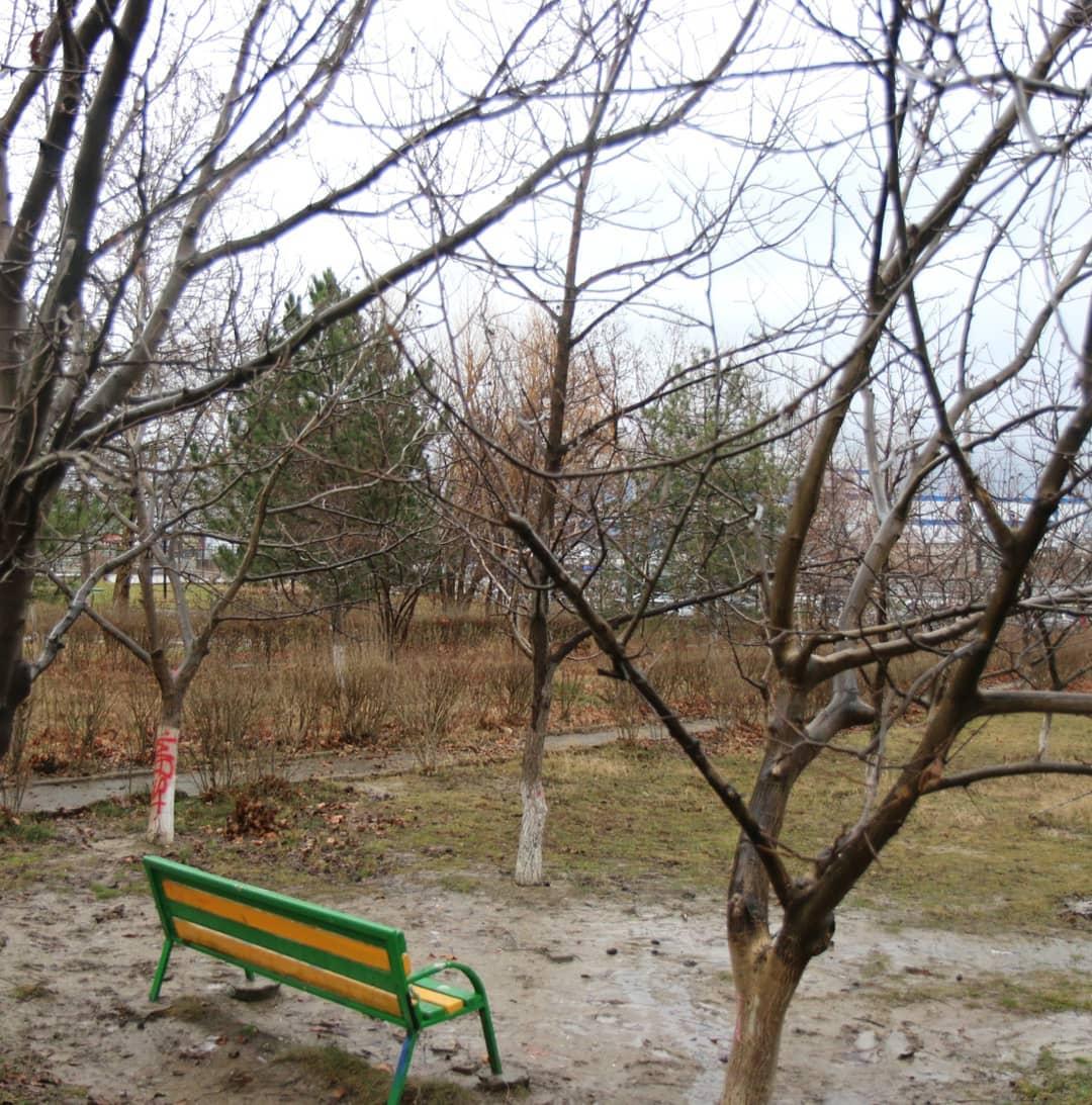 Стало известно, какие деревья вырубят в центре Новороссийска