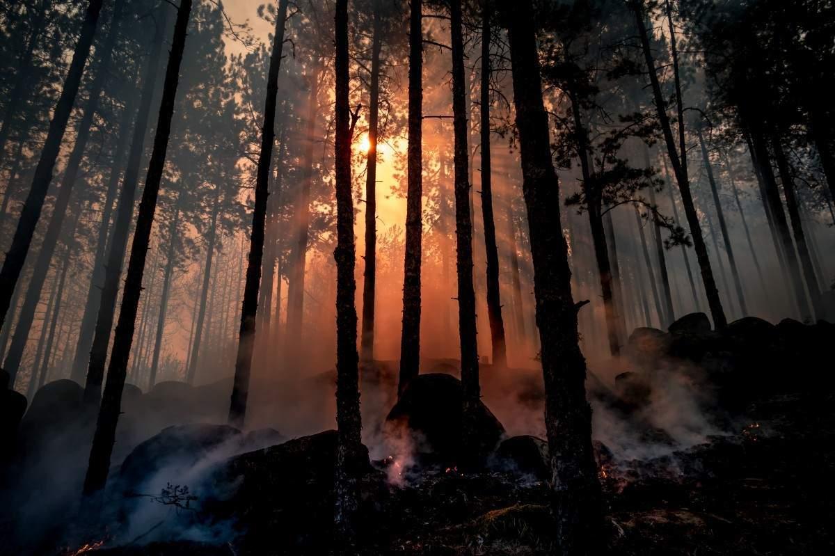 В Краснодарском крае ограничили посещение лесов