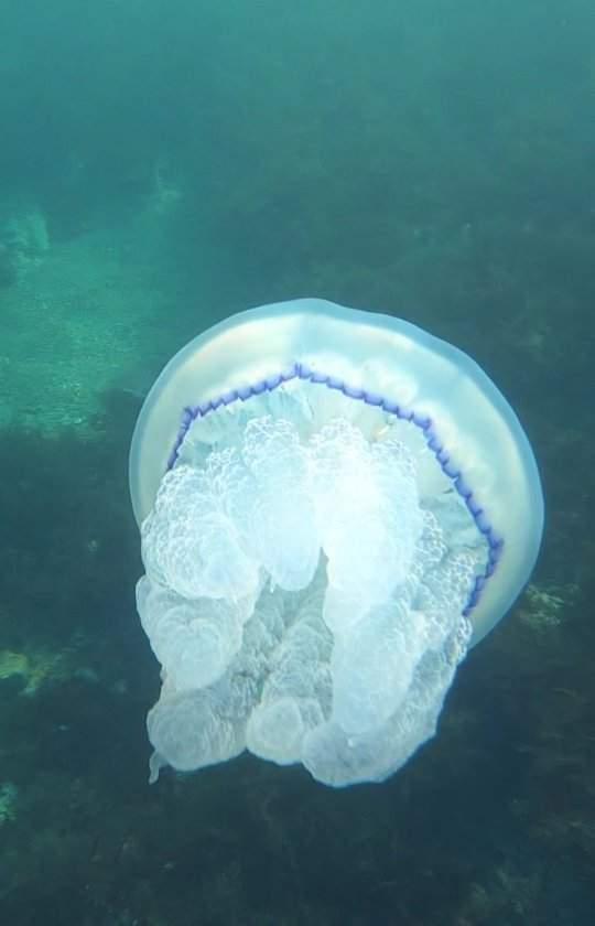 Подводное шоу медуз: новороссийский фотохудожник снял удивительно красивое видео