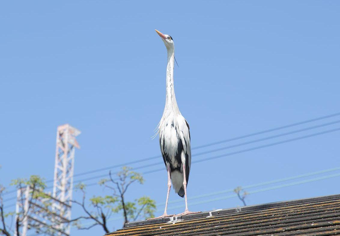 В Новороссийск прилетела длинноногая белая птица: горожане выдвигают свои гипотезы, кто это