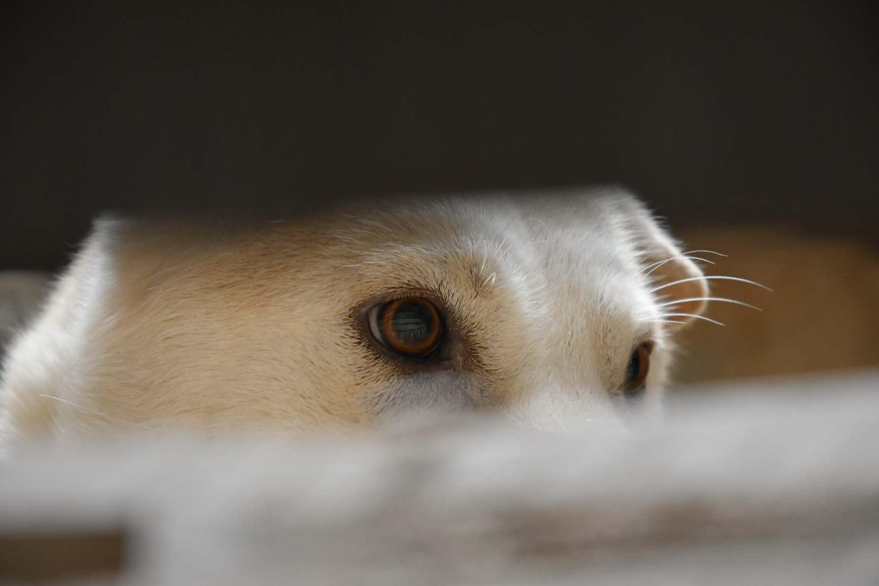 В Новороссийске несколько собак умерло загадочной смертью