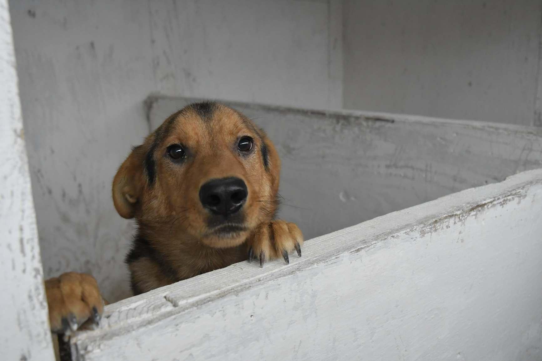 За брошенное животное в Италии можно сесть в тюрьму или заплатить большой штраф. Нужна ли такая практика в России?