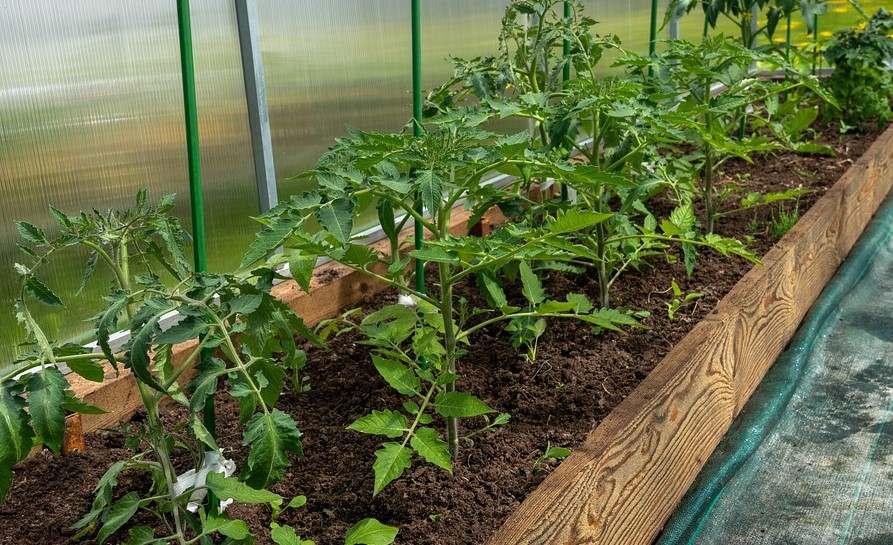 Как правильно хранить семена: самые важные советы для огородников