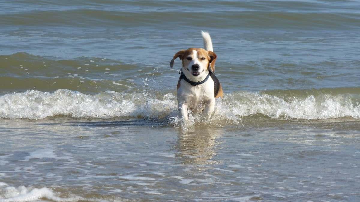 Собакам теперь не место на пляжах: МЧС утвердил новые требования