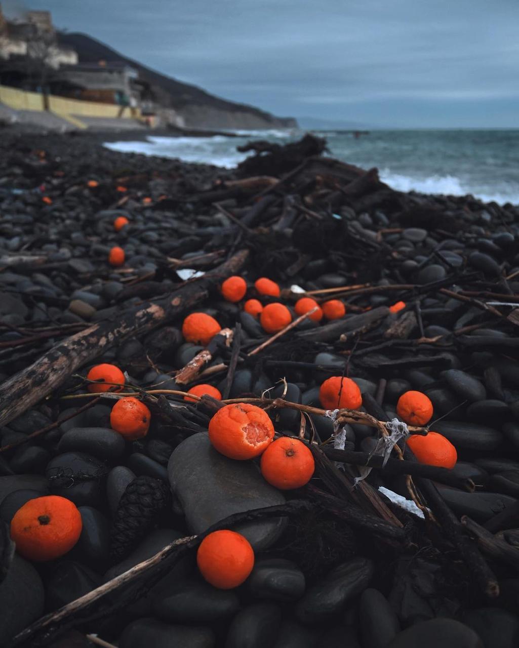 Широкая Балка после шторма оказалась усыпана мандаринами