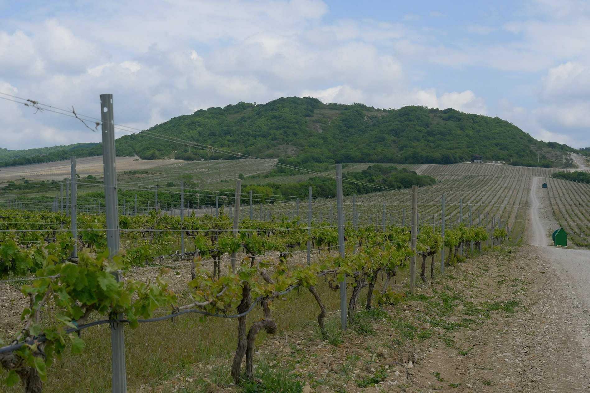 Губернатор Краснодарского края потребовал остановить в Новороссийске застройку виноградопригодных земель
