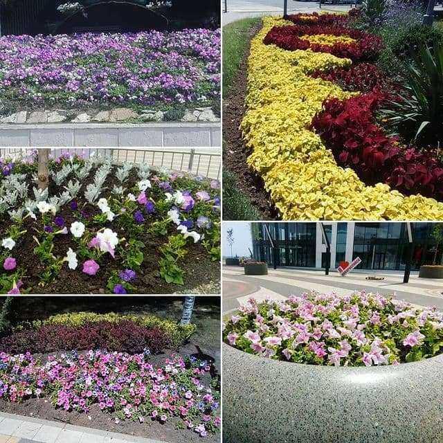 В Новороссийске высадят почти 700 тысяч цветов