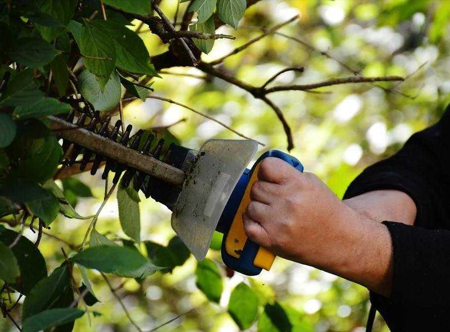 Новороссийские садоводы готовятся к обрезке плодовых деревьев