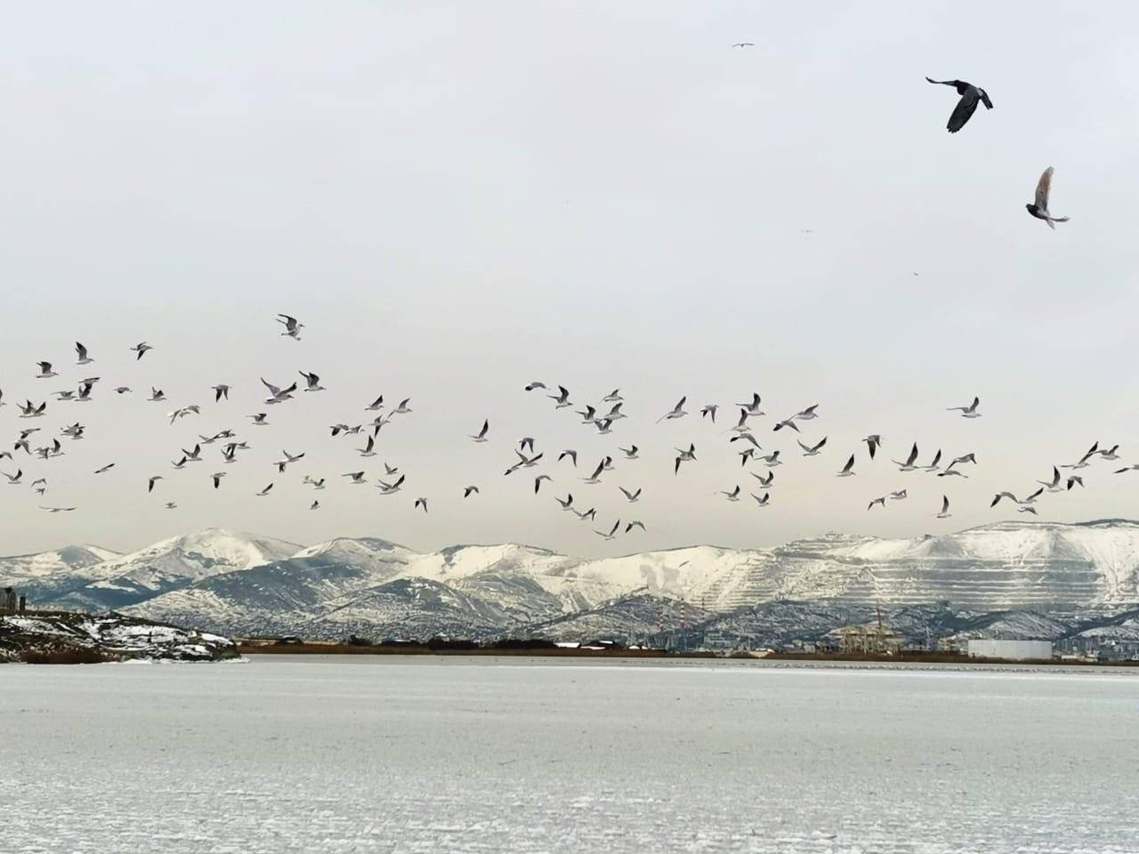Жительница Новороссийска нашла на пляже 19 мертвых птиц