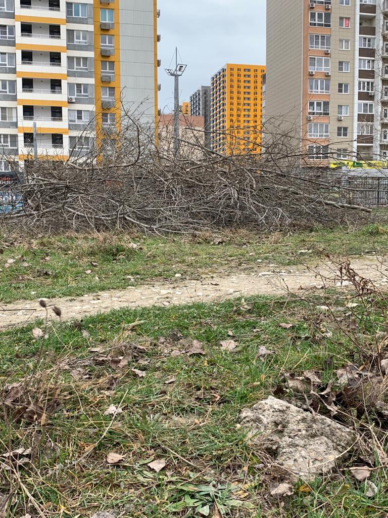 В Новороссийске жители выступили против строительства детского сада рядом с Пионерской рощей