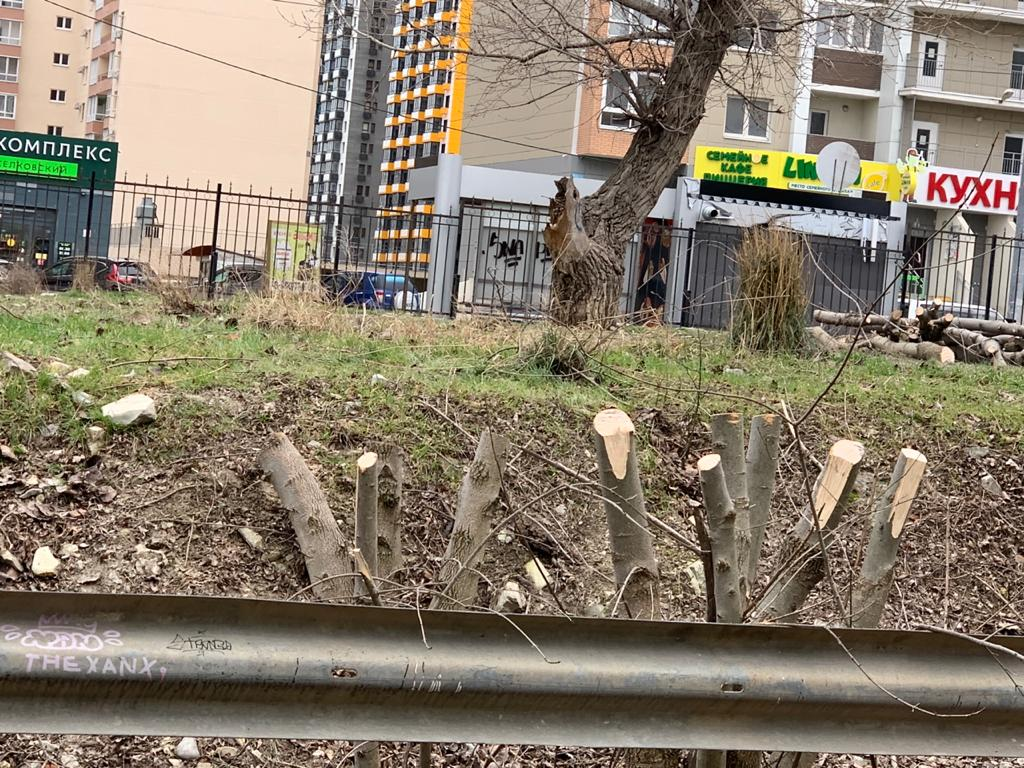 Администрация Новороссийска прокомментировала ситуацию с Пионерской рощей: детский садик построят рядом, а не внутри