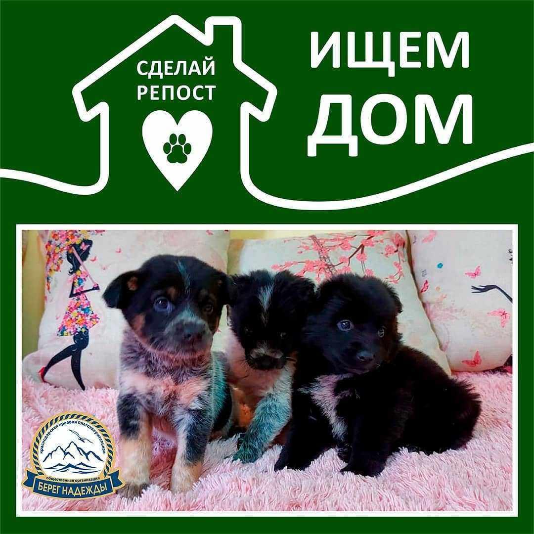 В Новороссийске прошла фотосессия для щенков дворняжки