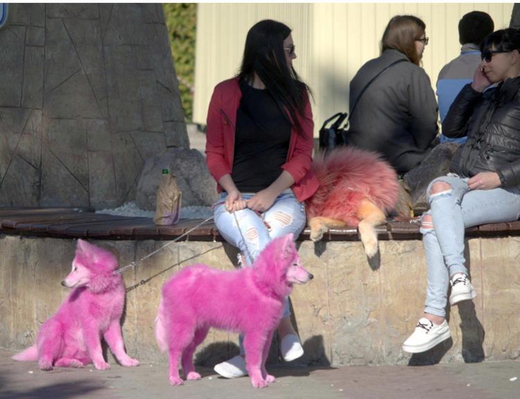Ветеринары: окрашенные в яркие цвета собаки — не норма