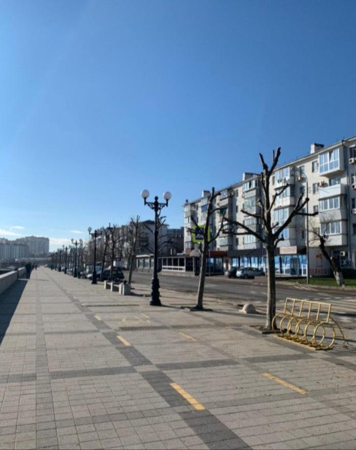 В Новороссийске специалисты объяснили, почему деревья выглядят не лучшим образом после кронирования