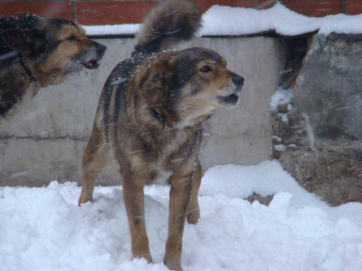 В Новороссийске усилили контроль за безнадзорными животными