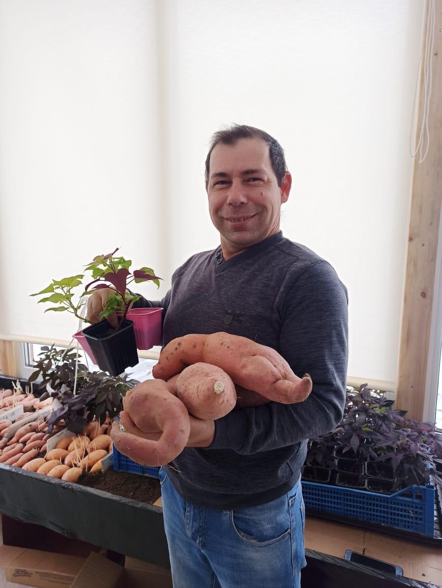 В Новороссийске картошку и морковь может потеснить батат