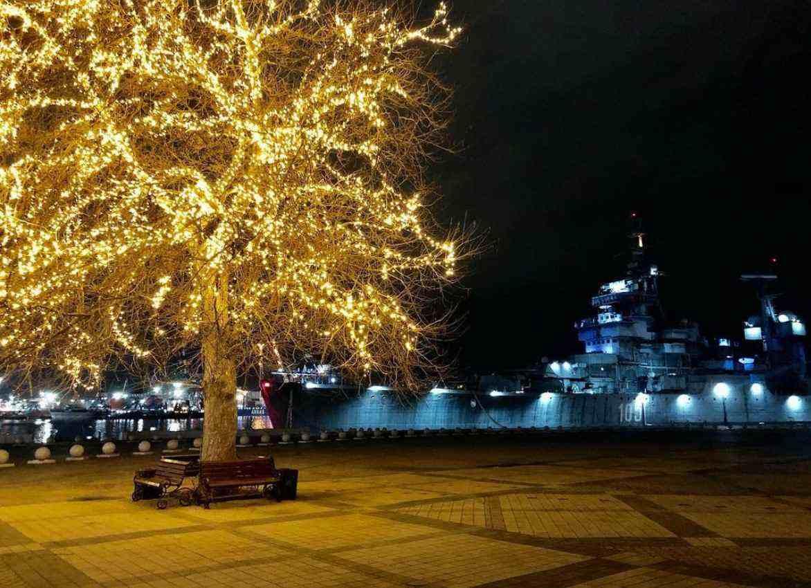 В Новороссийске засветилось дерево на Форумной площади