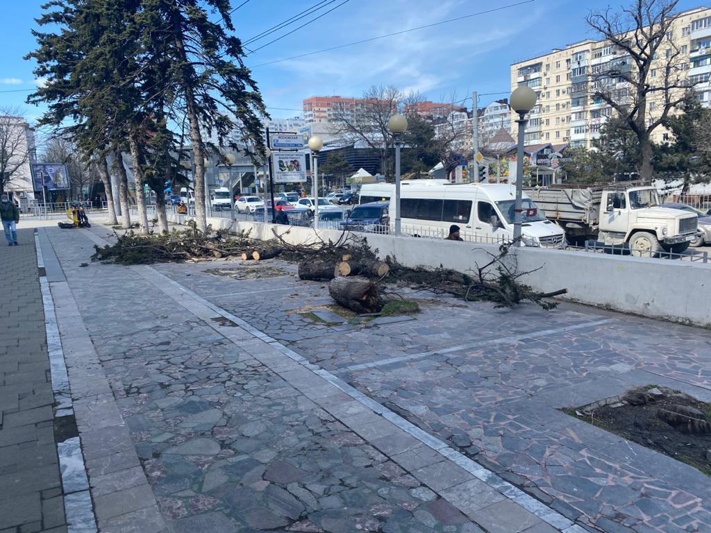 В Новороссийске норд-ост сломал около 160 деревьев. Будут ли посажены новые?