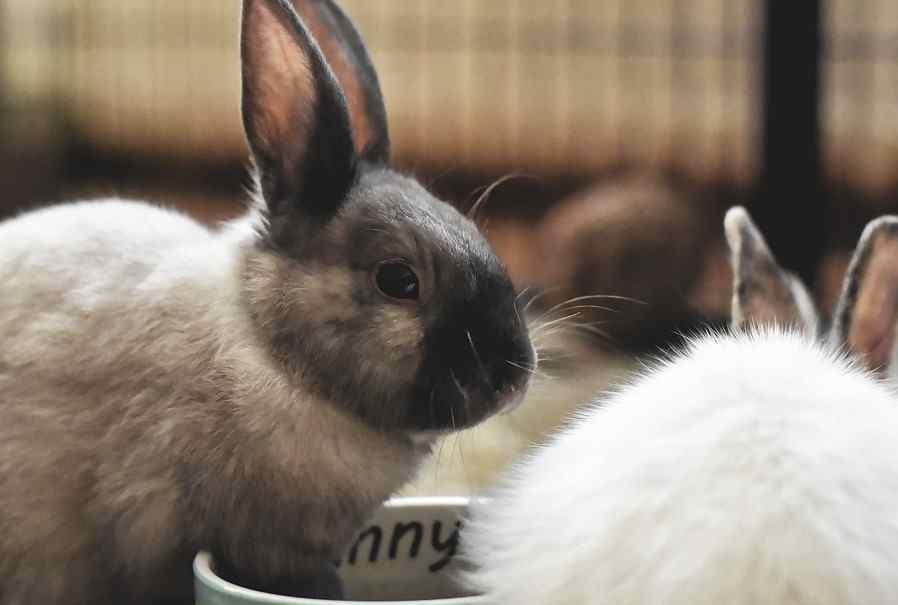 В Новороссийске женщина «развела» власти на субсидию, а кроликов так и не купила