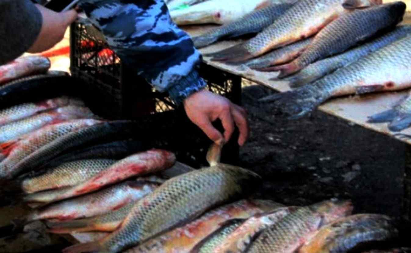 В Новороссийске оштрафовали за торговлю рыбой