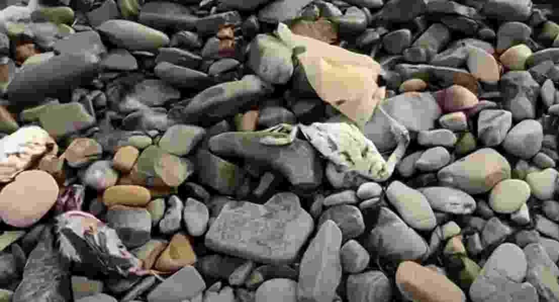 В массовой гибели птиц на побережье Черного моря виноват только естественный отбор
