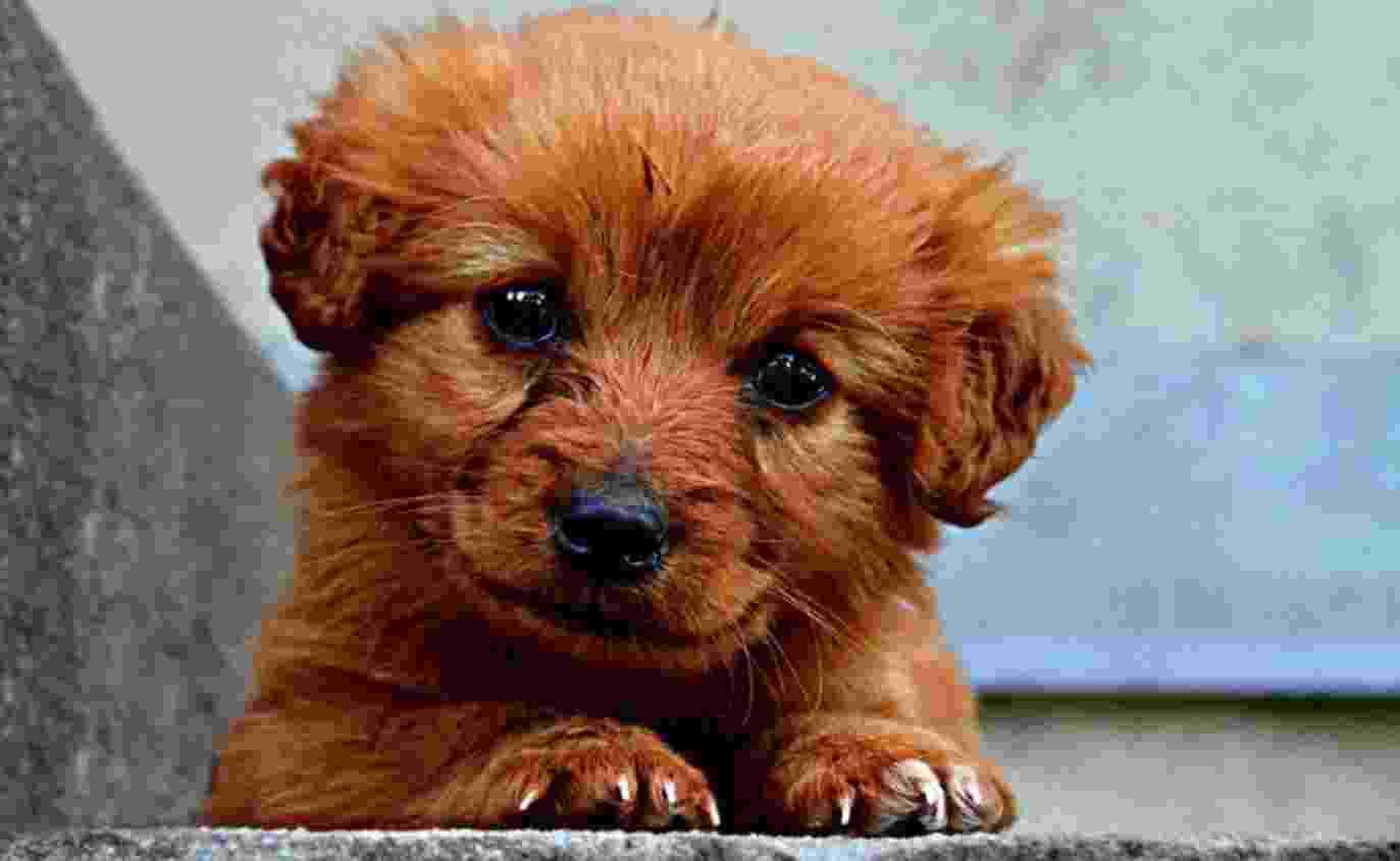 Завтра в Новороссийске пройдет щенячий фестиваль