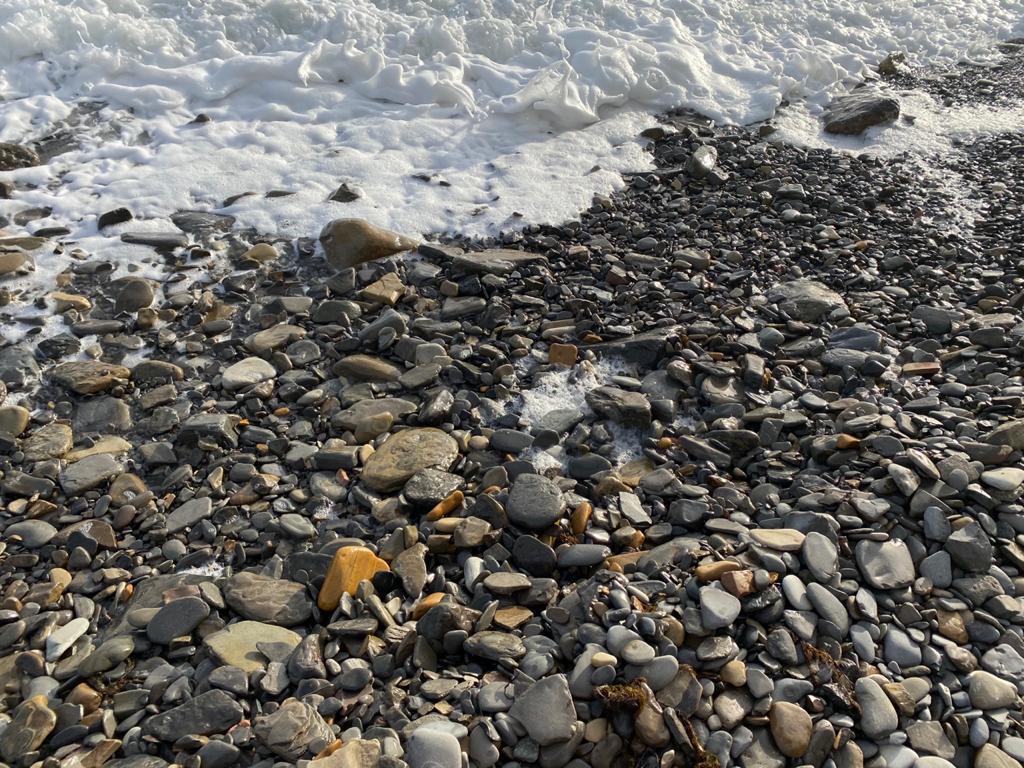 В Новороссийске берег моря усыпан трупами птиц и весь в белой пене: последствия катастрофы в Керченском проливе?