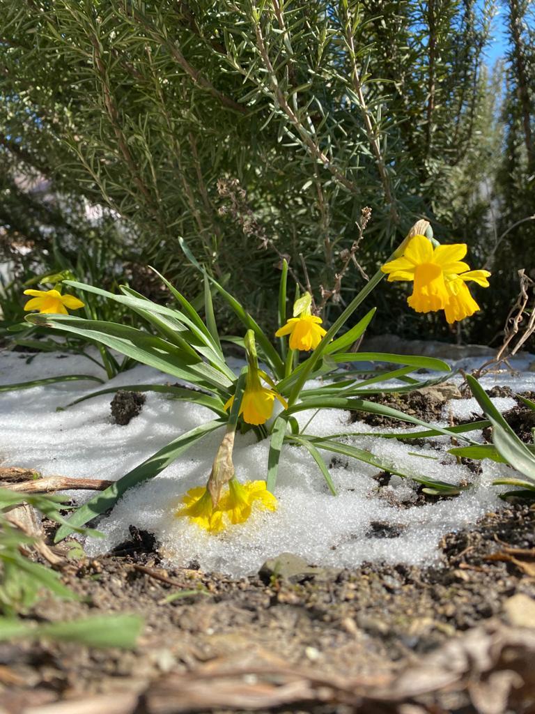 Синоптики обещают: весна в Новороссийск вернется уже в выходные