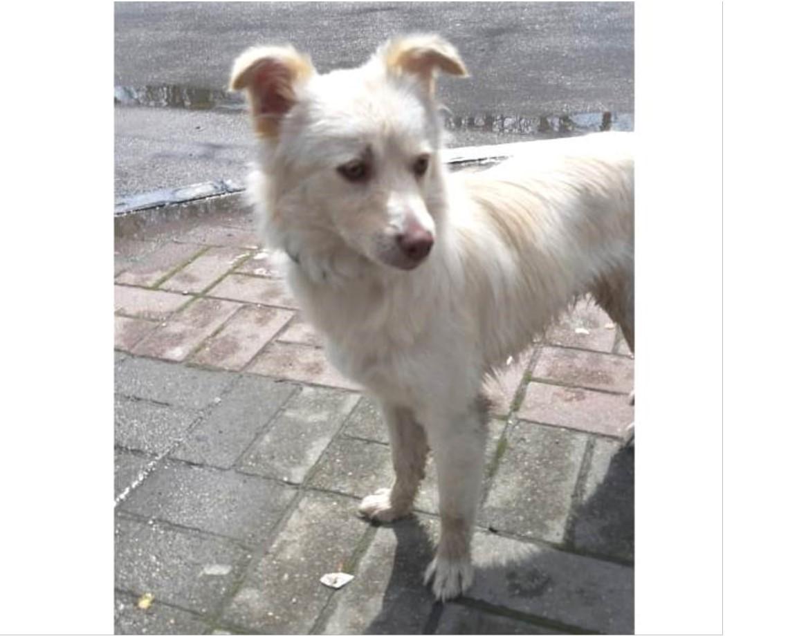В Новороссийске пропала собака — боевой друг Чапа