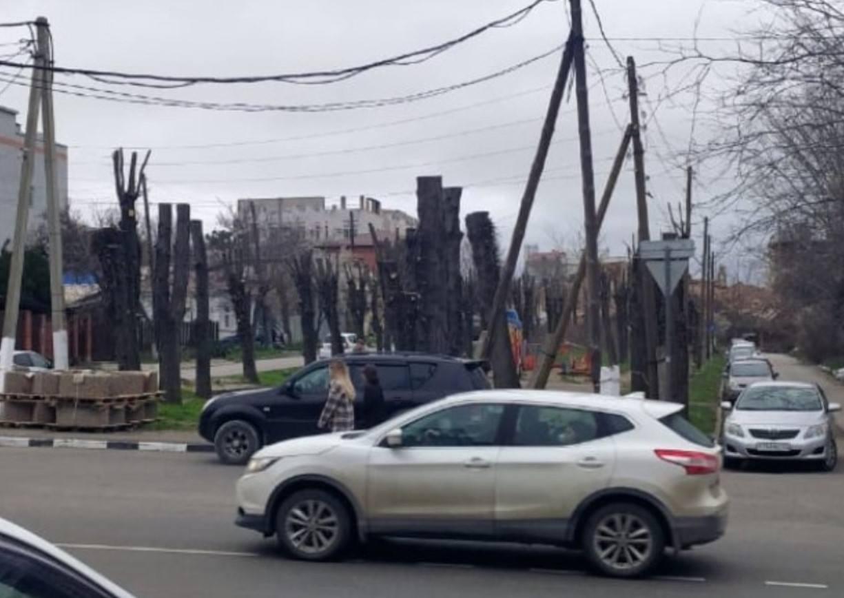 В Новороссийске никто не может понять: деревья срубили или кронировали?