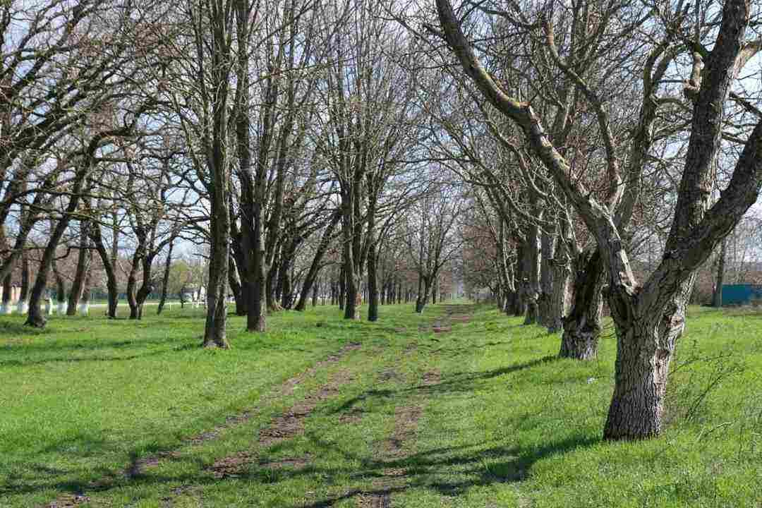 Под Новороссийском хотят создать виноградарский парк