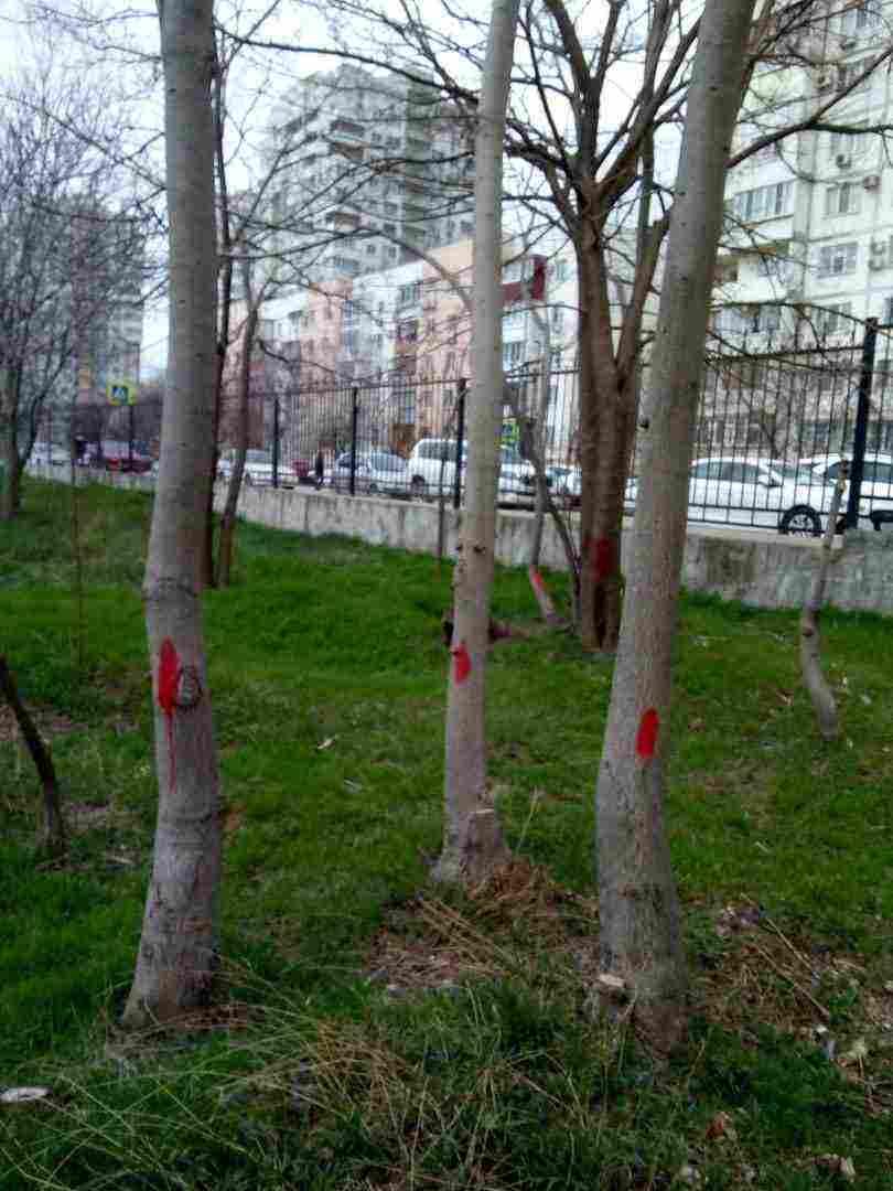 На особо охраняемой природной территории Новороссийска – в Пионерской роще — снова будут рубить деревья?