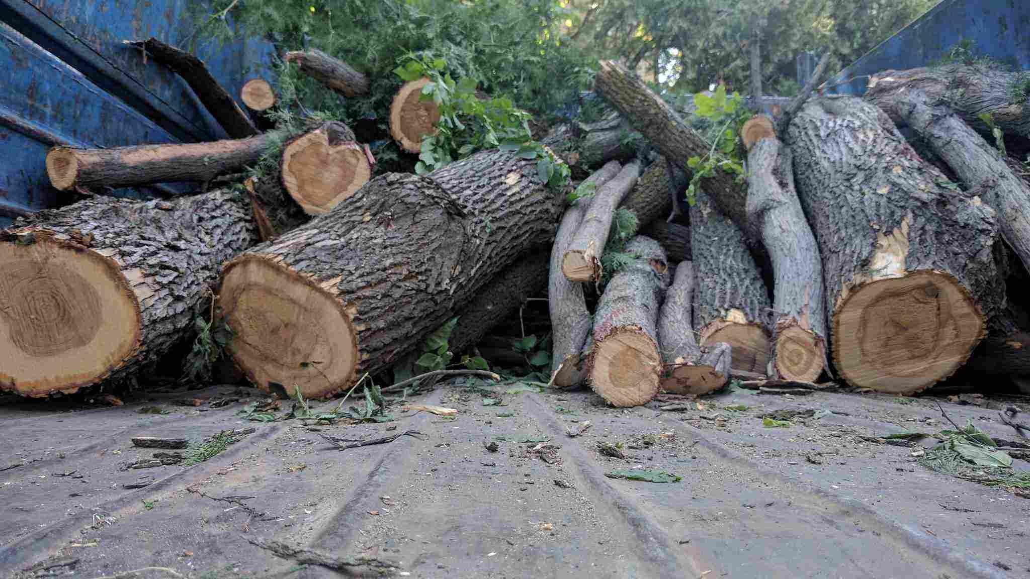 В Новороссийске два «дровосека» уничтожили 42 дерева