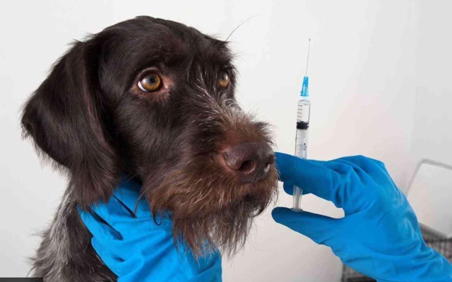 Вакцина от COVID-19 для животных уже выпускается в России