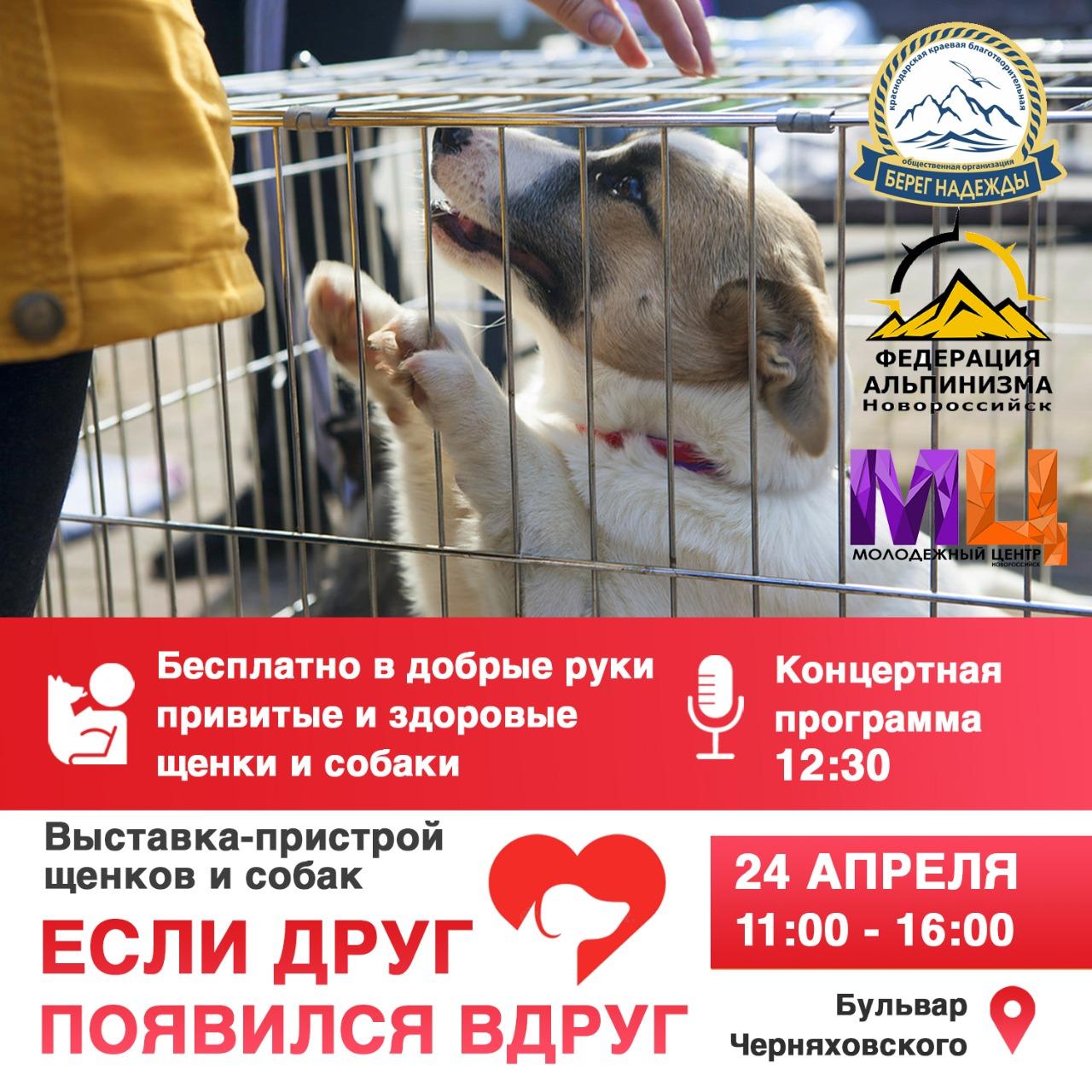 Новороссийцев приглашают на «Щенячий фестиваль»