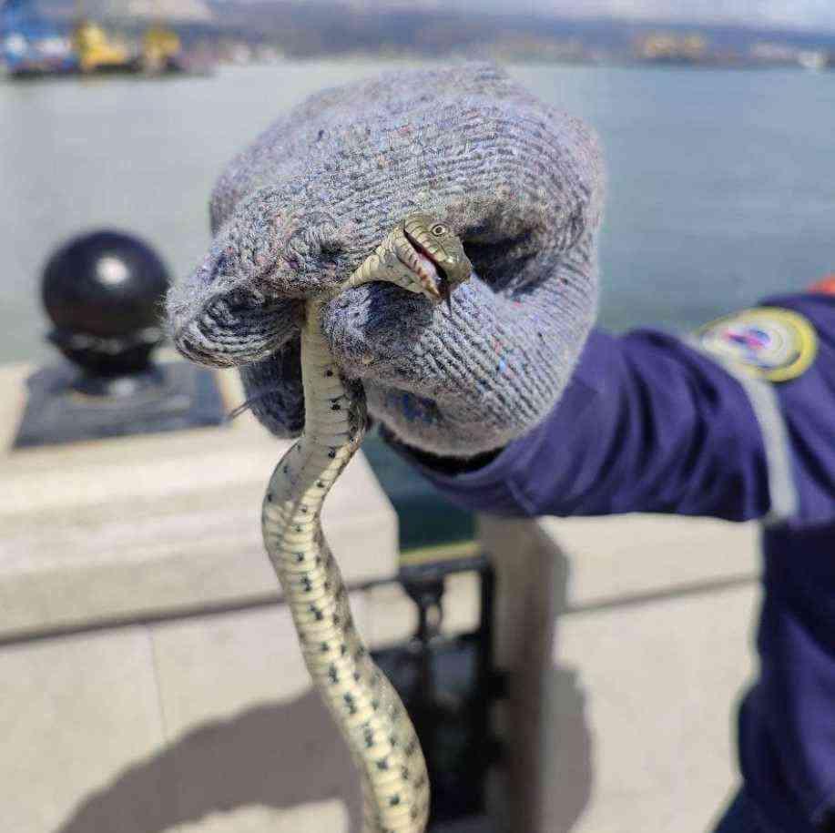 В Новороссийске змея гуляла по набережной
