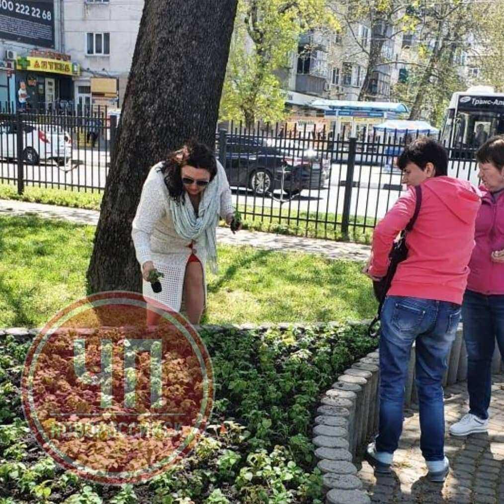 Полиция Новороссийска ищет женщин, которые выкапывали цветы на городских клумбах