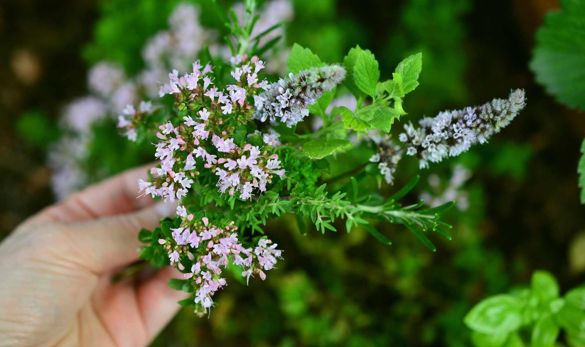 Съедобные сорняки, которые растут прямо у нас под ногами — вкусно и полезно!