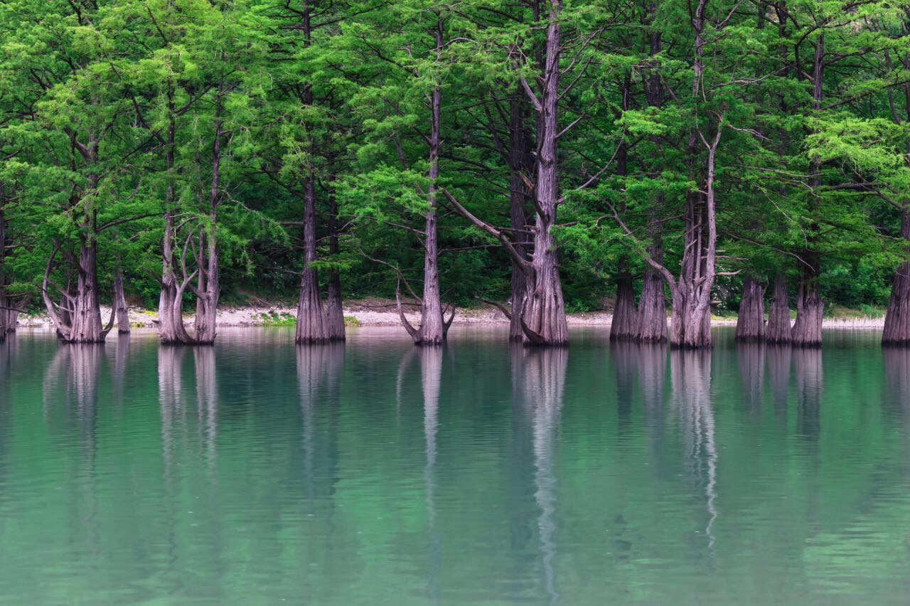 Кипарисовое озеро в Сукко наполнилось водой