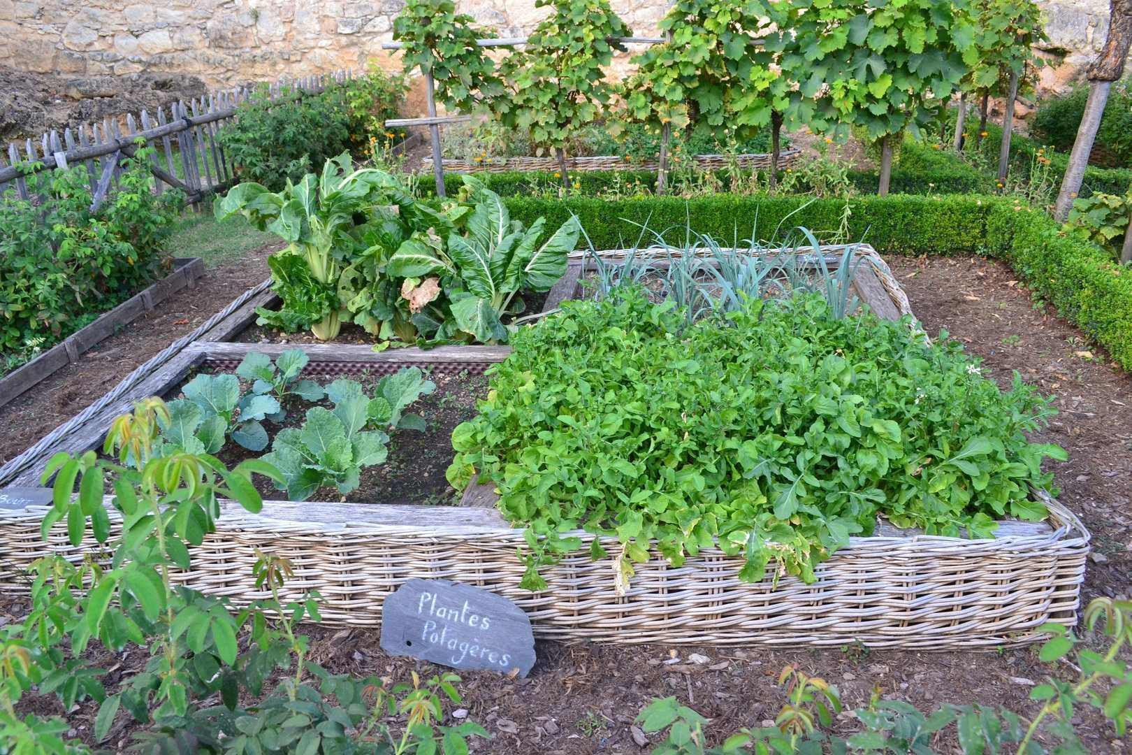 Соседи по грядке: совместимость растений в саду и огороде