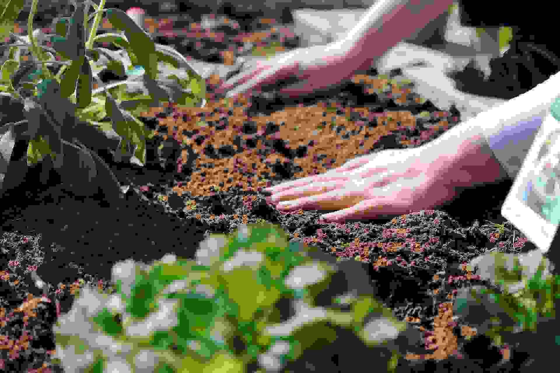 Что посадить в мае: советы огородникам