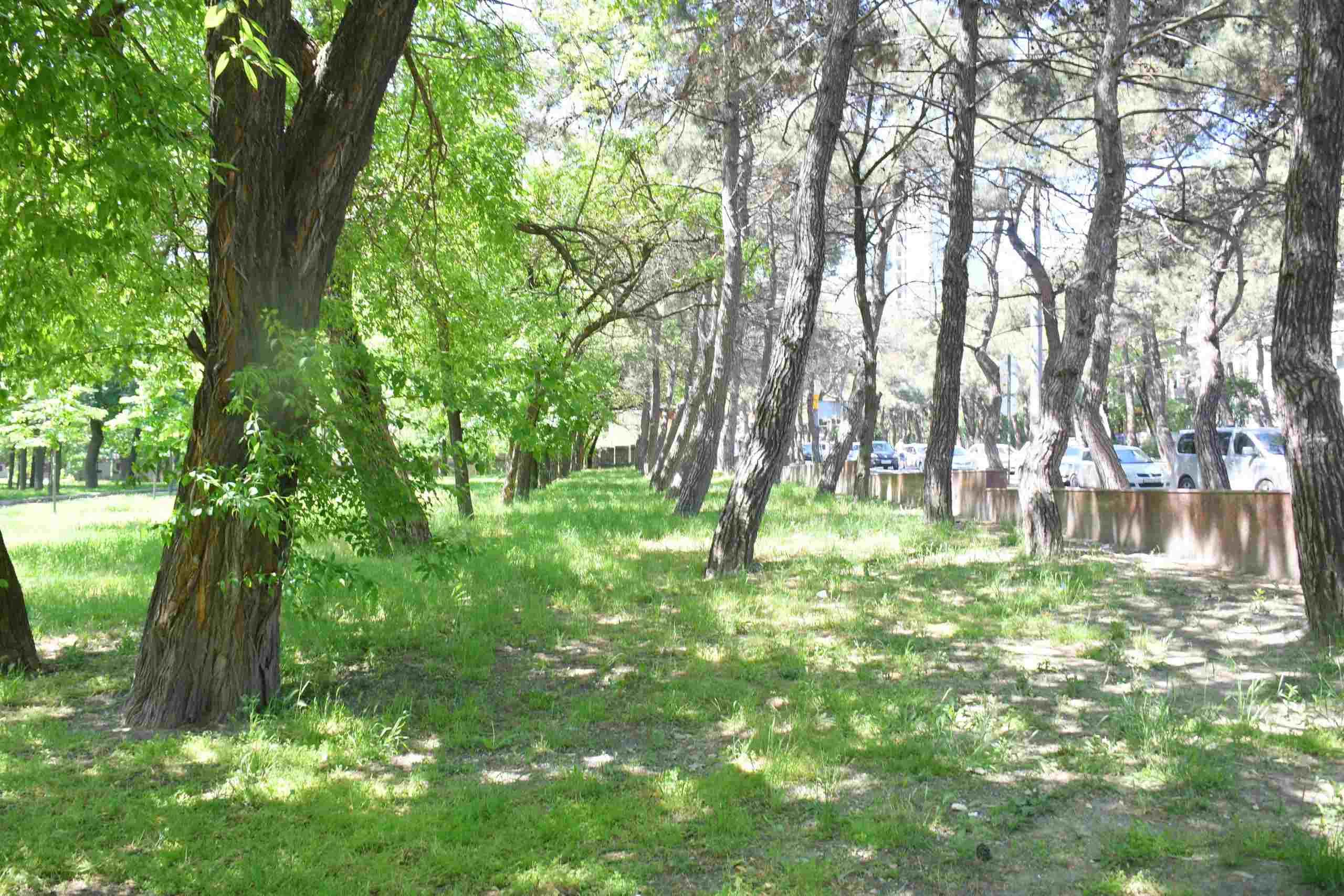 В Новороссийске, в парке им. Фрунзе, можно строить многоэтажки! Выводы независимой экспертизы шокировали защитников зеленых зон