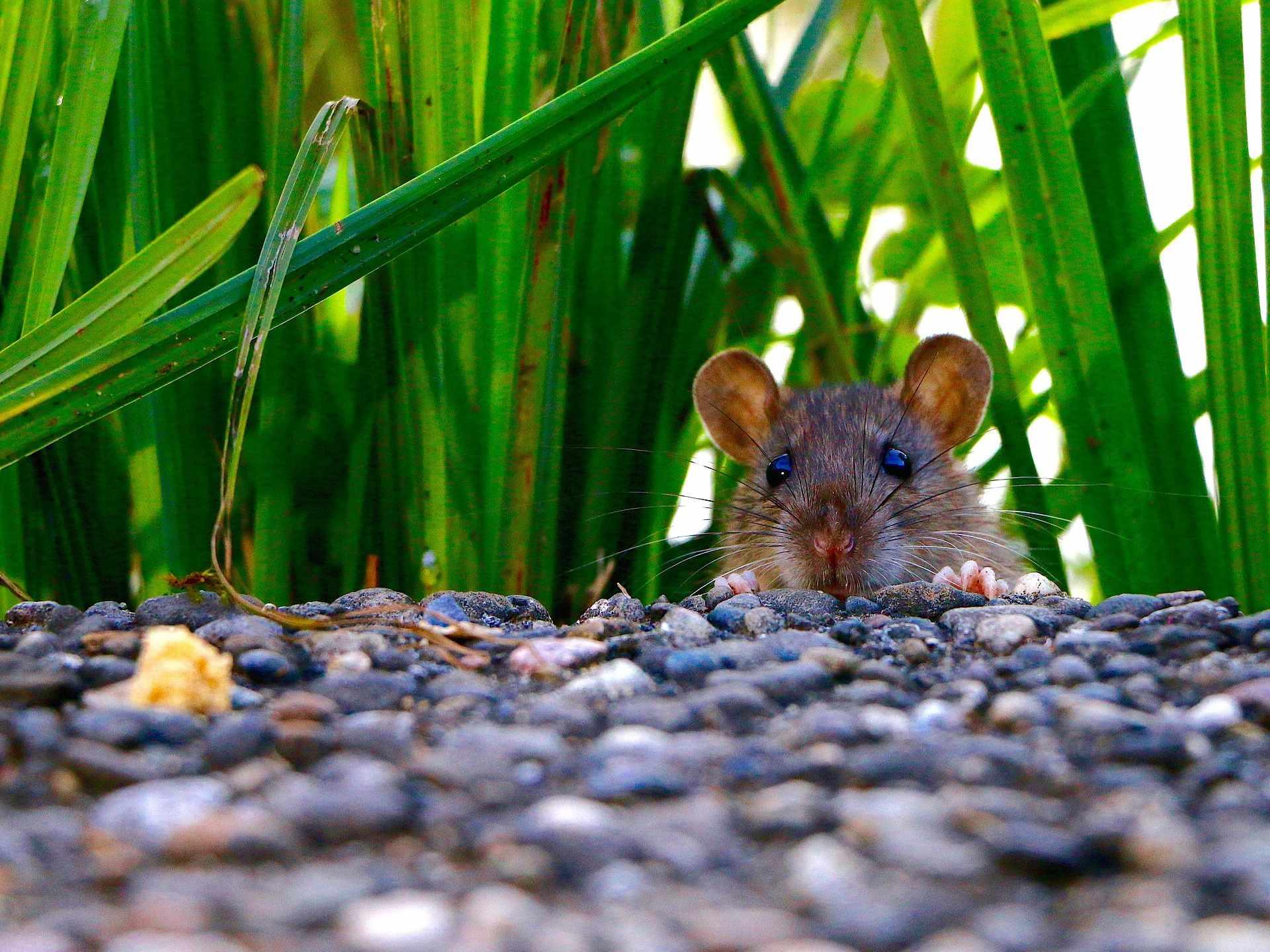 На пляжах Новороссийска обитают крысы (видео)