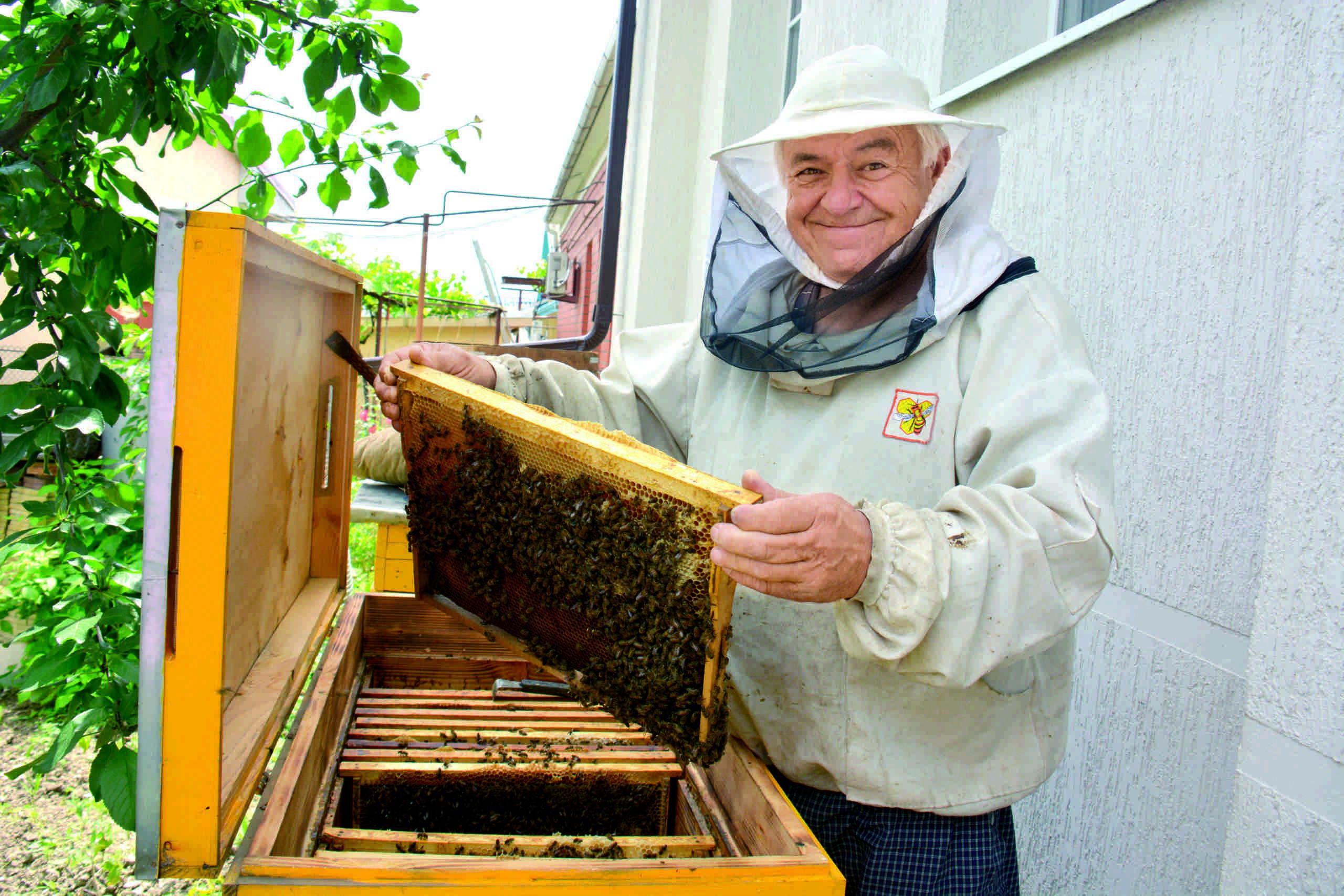 Домашний мед из собственных ульев на участке: пчеловоды Новороссийска рекомендуют