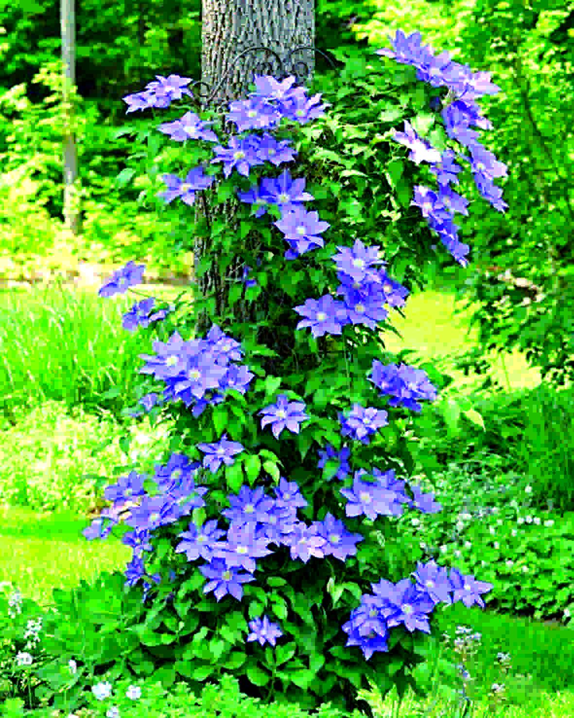 Цветущий сад круглый год: лайфхак новороссийских садоводов