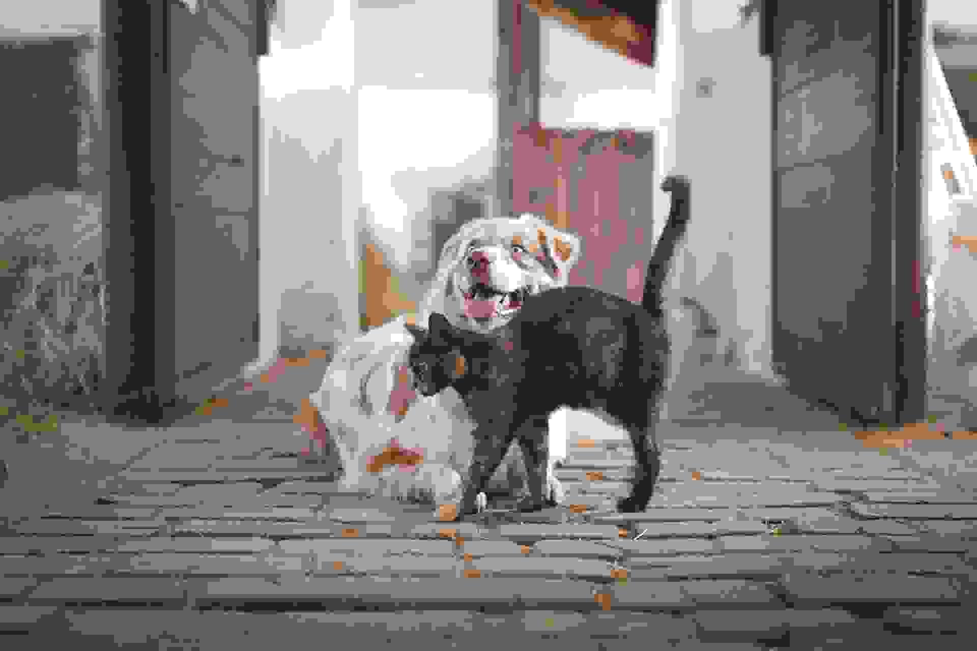 В Новороссийске стартует бесплатная стерилизация животных