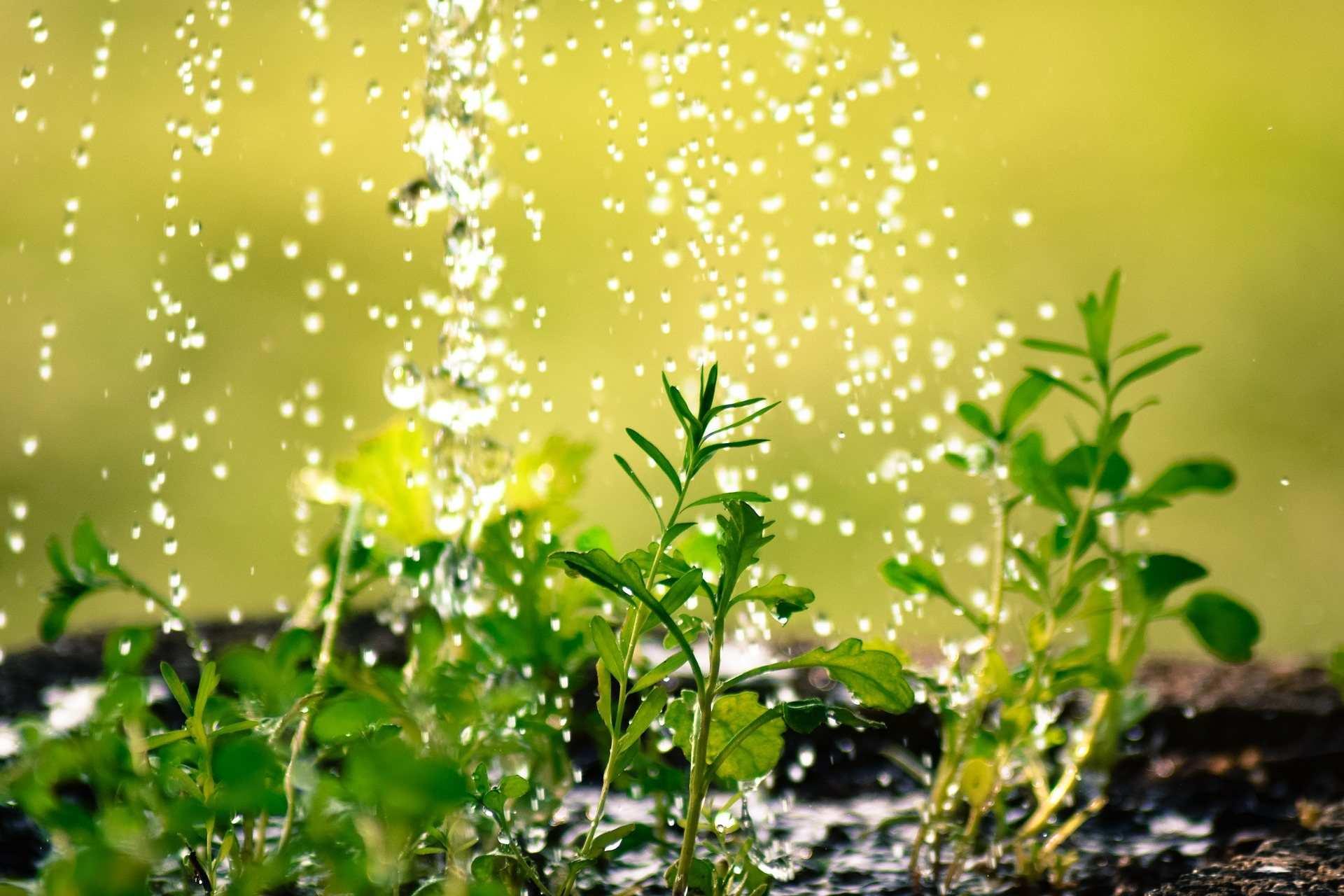 Актуально для Новороссийска: как спасать огород во время затяжных дождей?